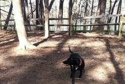 dog park in williamsburg